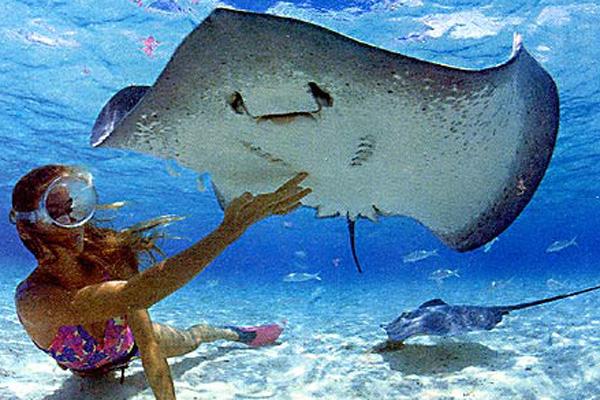 Mergulho nas Ilhas Maldivas